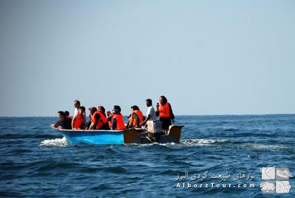 بازدید از دلفین ها