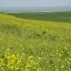 دشتهای پر از گل و مزارع ترکمن صحرا