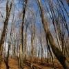 مناظر پاییزی جنگل های سوادکوه