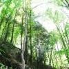 پیاده روی در جنگل های سواد کوه
