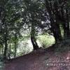 مسیر جنگلی قله ارفعه کوه