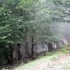 جنگل های الیمستان