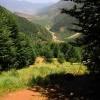 جنگلهای دامنه شمالی سیالان